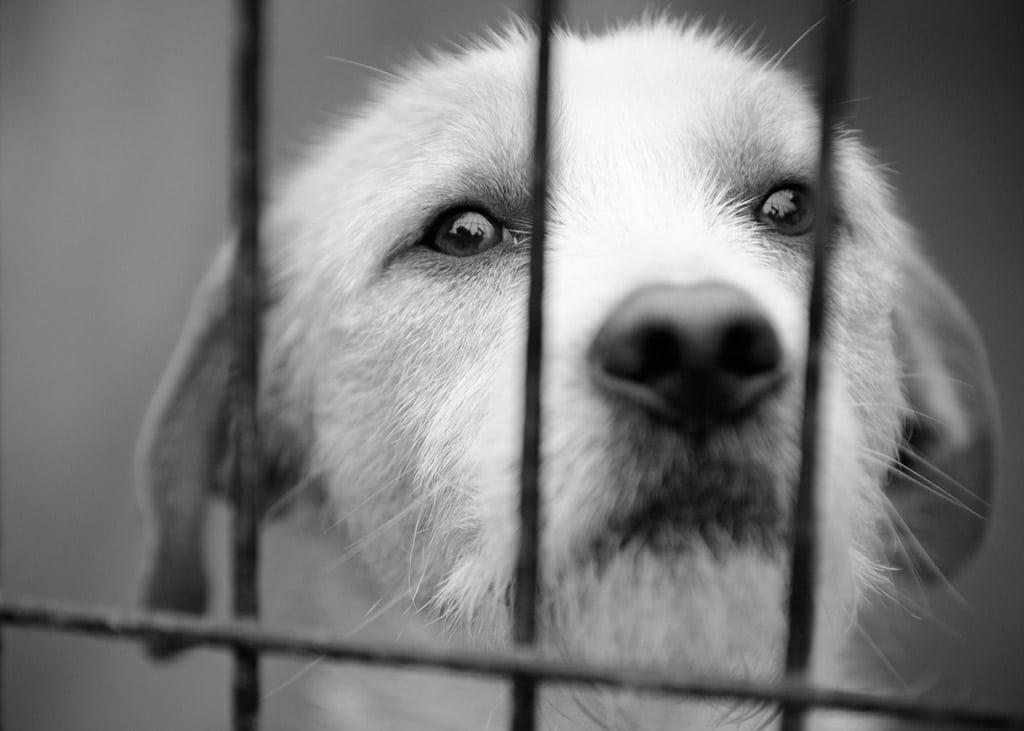 novo-projeto-de-lei-492-obriga-sindico-a-denunciar-maus-tratos-a-animais